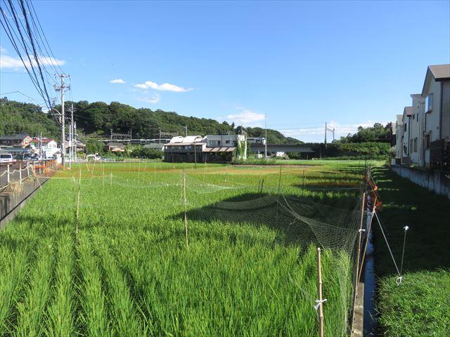 IMG_9876_R.JPG